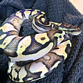 Willow after shed