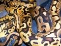 Lots O' Snakes